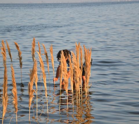 Gras im Meer3