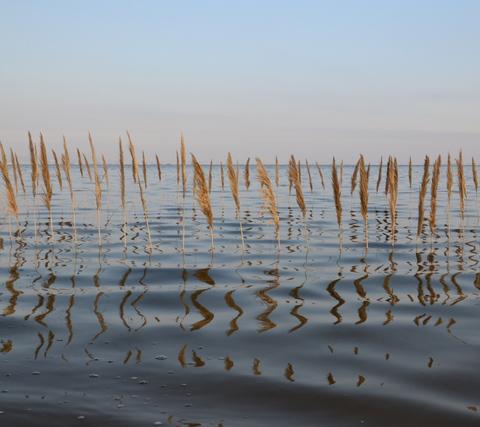 Gras im Meer6