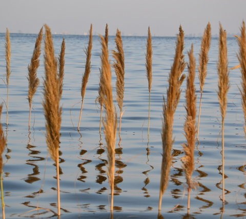 Gras im Meer5