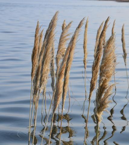 Gras im Meer1